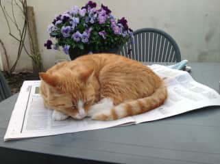 Buts ('Dent', because of his traumatic start in life) reading the newspaper