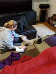 Kylie with our foster babies when we lived in Sydney. Noah here as a kitten (foster fail!).