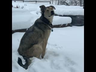 Darla enjoying the new snow
