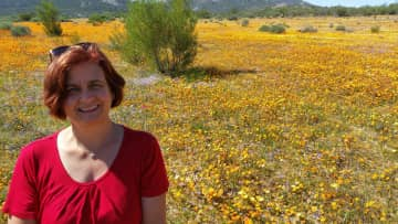 Travelling in South Africa, Namaqualand to see the wild flowers bloom in spring time.