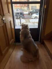 Odin believes that he is the neighborhood watch dog.