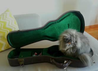 Snoops enjoyed Dan's guitar case as much as the music during our Switzerland housesit ⛷(Snoops le gusta el caso de la guitarra)