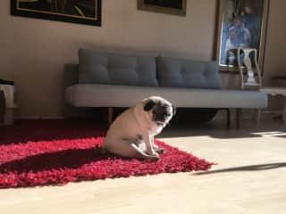Cherish sunbathing at home