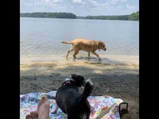 Taking Meg and Eavee to the lake near housesit for a swim!