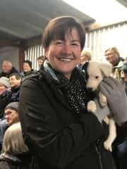Sheepdog trials, Wales