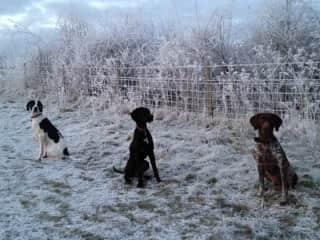 Winter in Surrey 2016