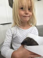 Hedy and a hedgehog we rescued