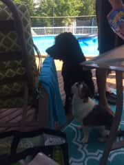 Gracie poolside with Daisy.