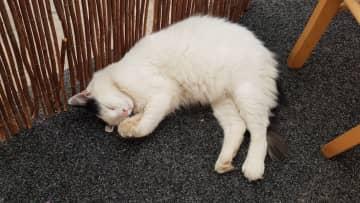 Sammy's semi wild cat in Croatia