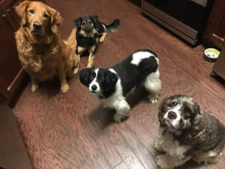 My 4 furkids - 3 are rescues