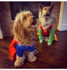 Leo and Elliot: one has a weak bladder and the other is working on his verbal control skills, both are superheroes