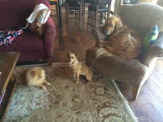 Teddy, Pumpkin and Cody