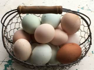 We have eggs in all colours! Feel free to enjoy some fresh eggs.