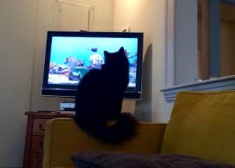 Taz likes to watch the aquarium screensaver