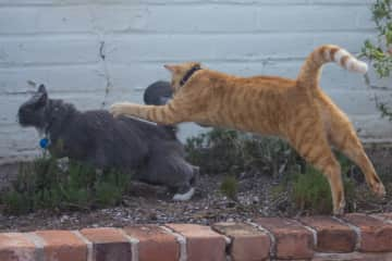 Taj and Sammy playing in the yard