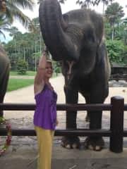 Beautiful Elephants at the Elephant Sanctuary in Bali