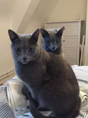 Shron and Kiki, two beautiful kitties I looked after in Zurich