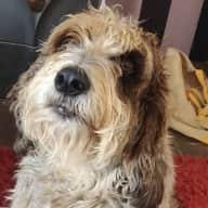 Profile image for pet sitter nicci