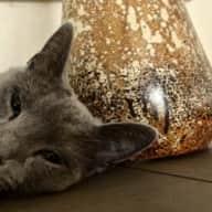 Profile image for pet sitter Jennifer Maury