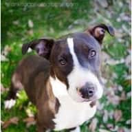 Profile image for pet sitters Claudette & Claudette