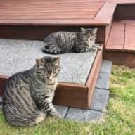 Profile image for pet sitters Becs & John