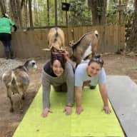 Profile image for pet sitters Tara & Heather