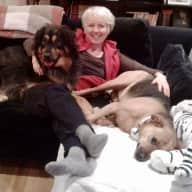 Profile image for pet sitter Kimberley