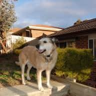 Profile image for pet sitter leonie