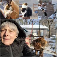 Profile image for pet sitter Ann