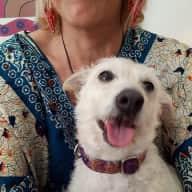 Profile image for pet sitter Kathryn