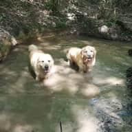 Profile image for pet sitters Nick & Elayne & Elayne