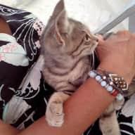 Profile image for pet sitter SYLVIE