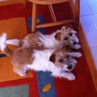 Profile image for pet sitters Jennifer & David