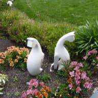 Profile image for pet sitters Pearl & John
