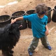 Profile image for pet sitter Ofra