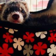 Profile image for pet sitter Becki