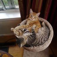 Profile image for pet sitters Karen & Rory