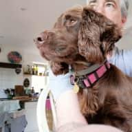 Profile image for pet sitter Steven