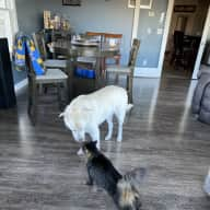 Profile image for pet sitter Angeline