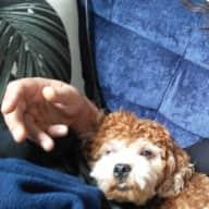 Profile image for pet sitter Samir