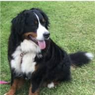 Profile image for pet sitters Lisa & Paul