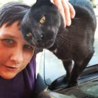 Profile image for pet sitter Tiger