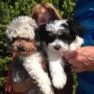Profile image for pet sitters Vivienne and Chris & Chris
