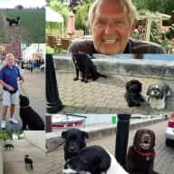Profile image for pet sitter Frank