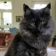 Profile image for pet sitter Susanne