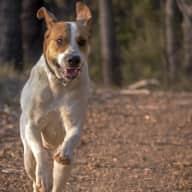 Profile image for pet sitter Jacqui