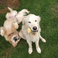 Profile image for pet sitters Nita & Charlie