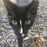 Profile image for pet sitter No name