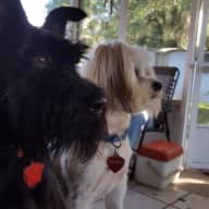 Profile image for pet sitters Shelia & Donald
