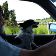 Profile image for pet sitters Elise & Rick
